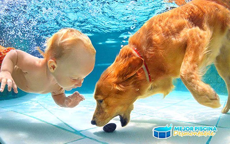 son seguras las piscinas para perros